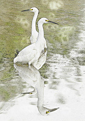 Photograph - Snowy Egrets Photo Art 5960-113017-1 by Tam Ryan