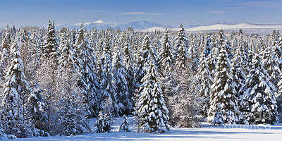 Photograph - Snowy Evergreen Forest by Alan L Graham