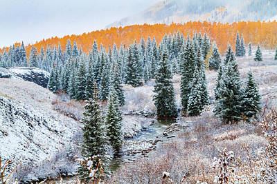 Photograph - Snowy Fall Along The Creek by Teri Virbickis