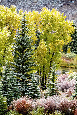 Photograph - Snowy Fall Morning by Teri Virbickis