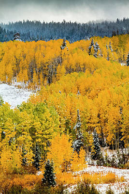 Photograph - Snowy Fall Scene On Kebler Pass by Teri Virbickis