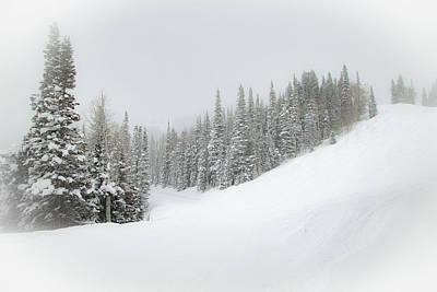 Photograph - Snowy Firs by Sean Allen