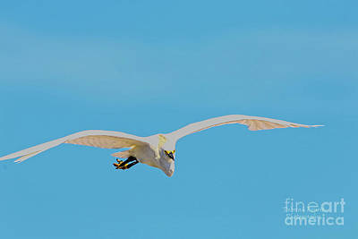 Photograph - Snowy Flight by Deborah Benoit
