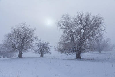 Photograph - Snowy Foggy Sun Burning by James BO Insogna