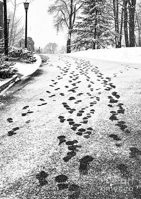 Photograph - Snowy Footsteps by Alissa Beth Photography