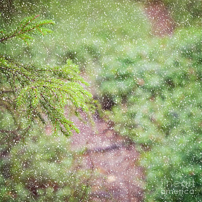Photograph - Snowy Forest Background by Sophie McAulay
