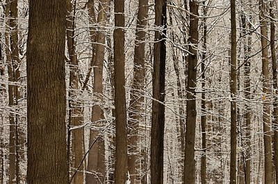Digital Art - Snowy Forest Elevation by The Mariabelones