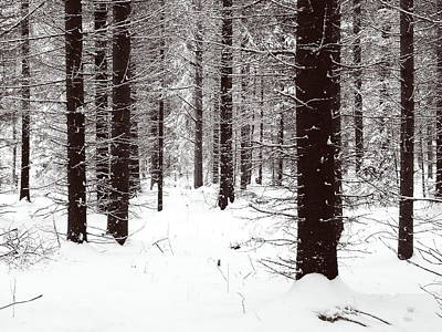 Photograph - Snowy Forest In Bw by Jouko Lehto