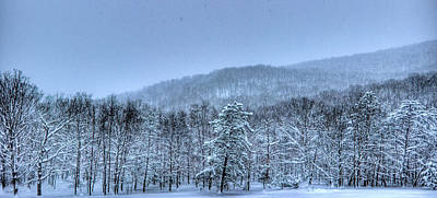Photograph - Snowy Forest by Jonny D