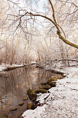 Photograph - Snowy Forest Sunshine by Sophie McAulay
