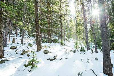 Snowy Forest Wilderness Playground Art Print by James BO Insogna