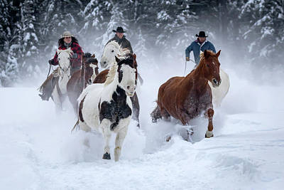 Photograph - Snowy Gallop by Jack Bell