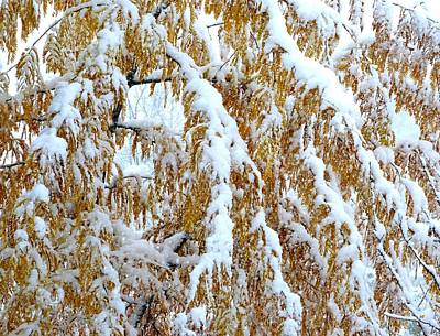 Photograph - Snowy Golden Locust by Will Borden