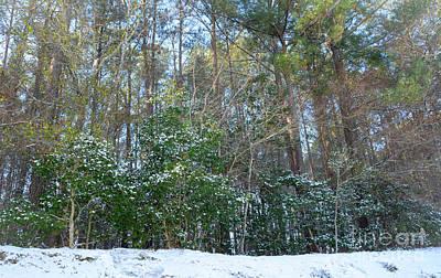 Photograph - Snowy Landscape - Georgia by Adrian DeLeon
