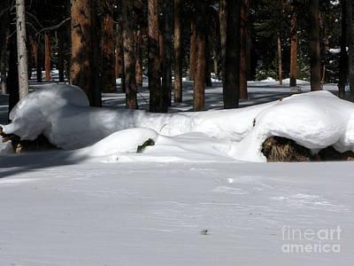 Snowy Log Art Print by PJ  Cloud