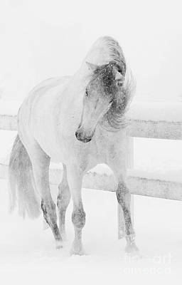 Grey Horse Photograph - Snowy Mare Shakes Her Head by Carol Walker