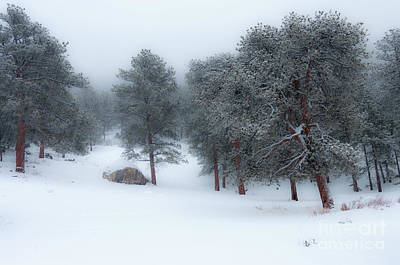 Photograph - Snowy Morning - 0622 by Jerry Owens