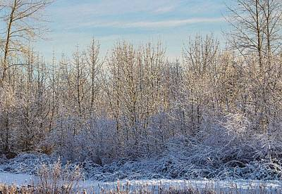 Photograph - Snowy Morning by Brian Eberly