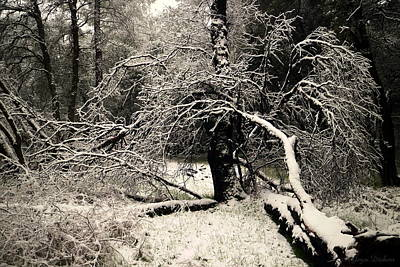 Photograph - Snowy Morning In Cottonwood Ca by Joyce Dickens
