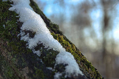 Snowy Moss Art Print