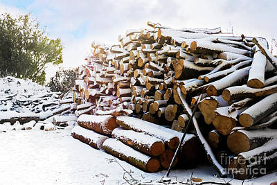 Photograph - Snowy Mylor Logs by Terri Waters