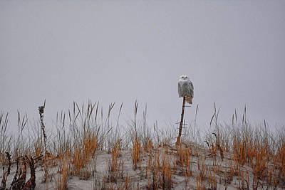 Photograph - Snowy Owl 2 by Raymond Salani III