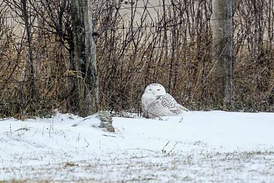 Photograph - Snowy Owl 3 by Gary Hall