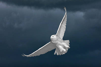 Individuality Digital Art - Snowy Owl And The Storm by Mark Duffy