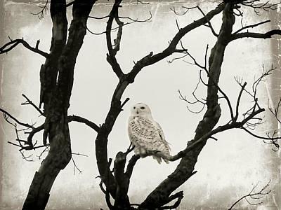 Photograph - Snowy Owl by Brenda Conrad
