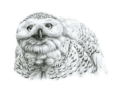 Snowy Owl -bubo Scandiacus Art Print by Svetlana Ledneva-Schukina