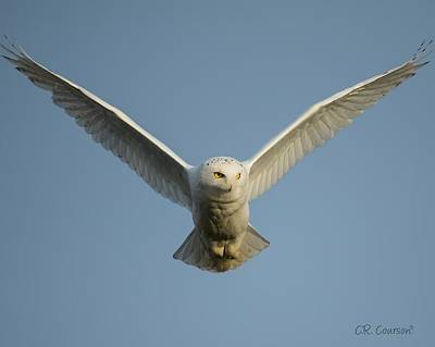 Photograph - Snowy Owl by CR Courson
