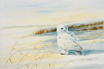 Snowy Owl Painting - Snowy Owl by Dag Peterson