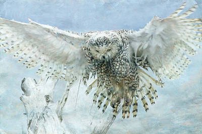 Photograph - Snowy Owl Descending by Angie Vogel