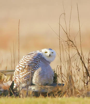 Mixed Media - Snowy Owl In Field by Dan Sproul
