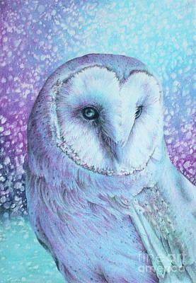 Drawing - Snowy Owl In Four Colors by Kay Walker