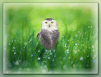 Painting - Snowy Owl In The Grass - Painting by Ericamaxine Price