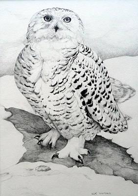 Raptors Drawing - Snowy Owl by Jill Iversen
