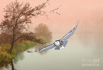Snowy Owls Wall Art - Photograph - Snowy Owl Morning by Laura D Young