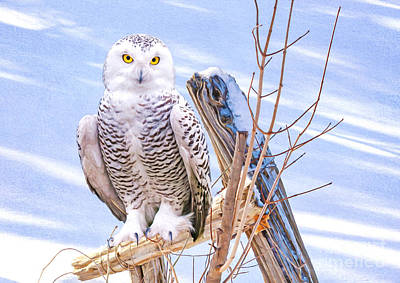 Snowy Owl Wall Art - Photograph - Snowy Owl On Guard by Laura D Young