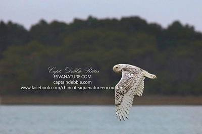 Photograph - Snowy Owl Over Marsh by Captain Debbie Ritter