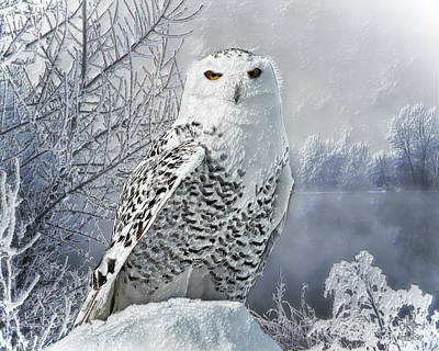 Digital Art - Snowy Owl by Pennie McCracken