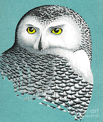 Mixed Media - Snowy Owl Portrait 2 by Art MacKay