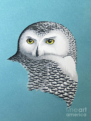 Mixed Media - Snowy Owl Portrait 3 by Art MacKay