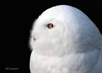 Snowy Owl Portrait Art Print by CR  Courson