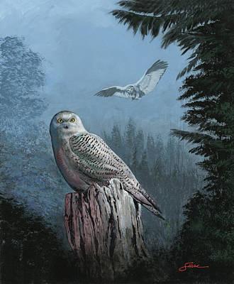 Snowy Owl Resting Art Print by Harold Shull
