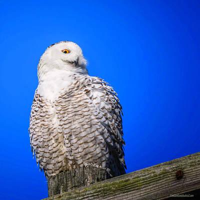 Photograph - Snowy Owl Stare by LeeAnn McLaneGoetz McLaneGoetzStudioLLCcom