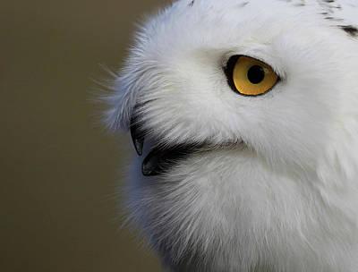 Photograph - Snowy Owl Up Close by Steve McKinzie