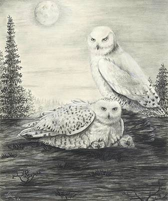 Snowy Owls Original by Stephanie Yates