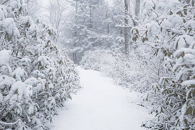 Photograph - Snowy Path by Brian Hale