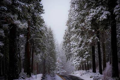 Snowy Path Art Print